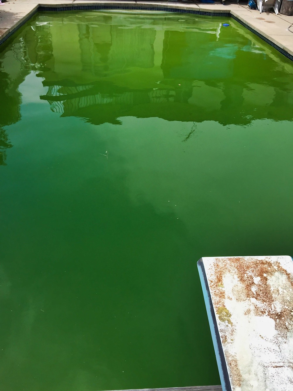 Pool-Solutions-LLC-Torrance-Green-to-Clean-Pool-Service-before